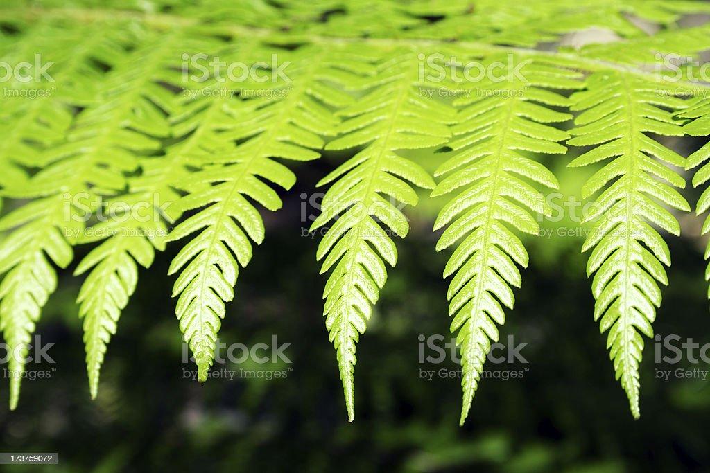 fern detail royalty-free stock photo