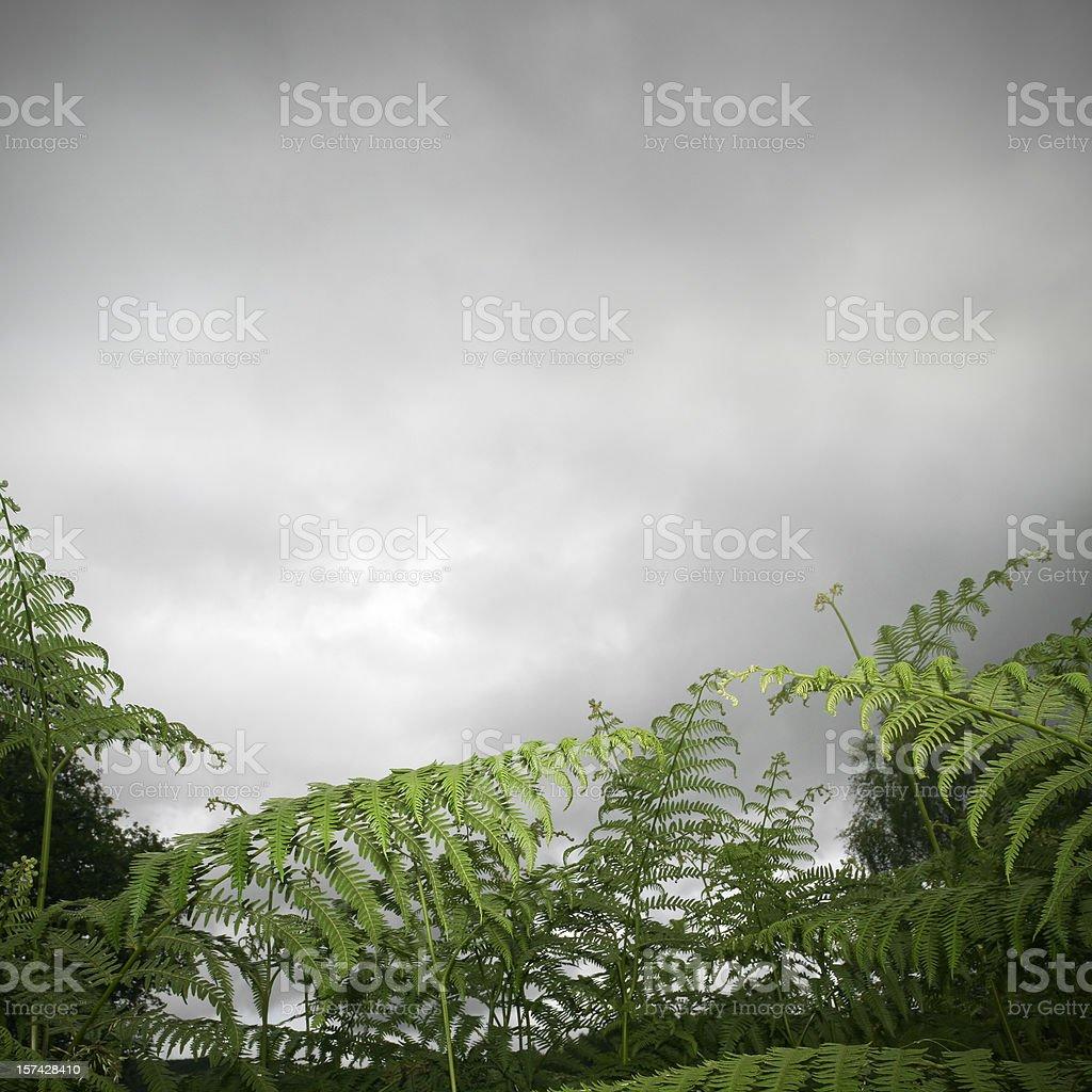 Fern field royalty-free stock photo