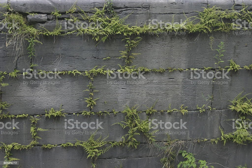 Fern Filled Mortar Joints royalty-free stock photo