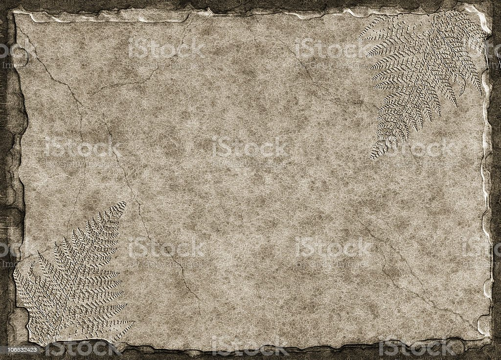 Fern Fossils royalty-free stock photo