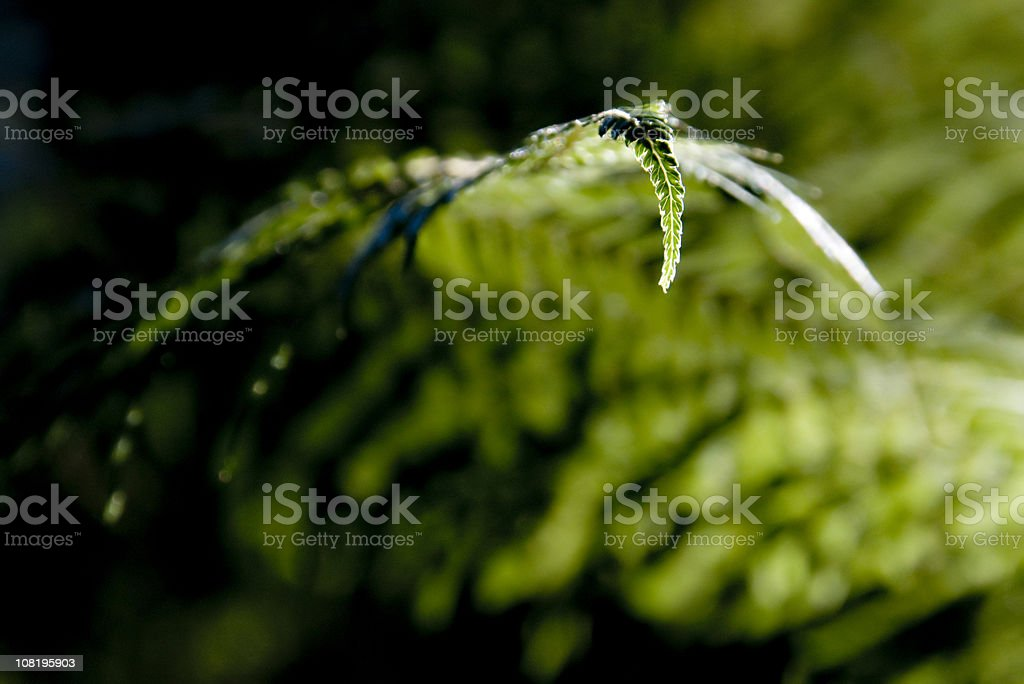 Fern Frond Close-up royalty-free stock photo