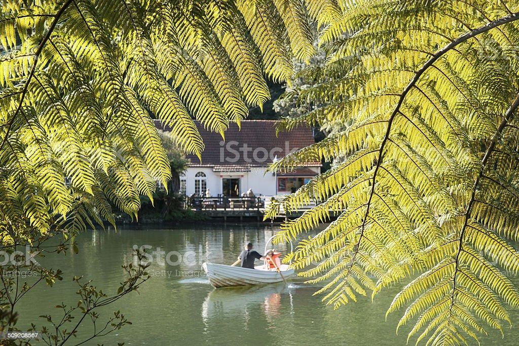 Fern fronds frame lake scene. stock photo