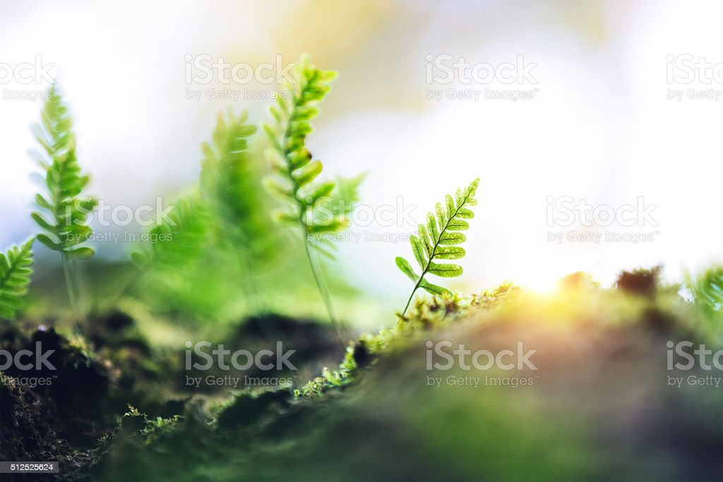 Fern Growing From The Tree stock photo