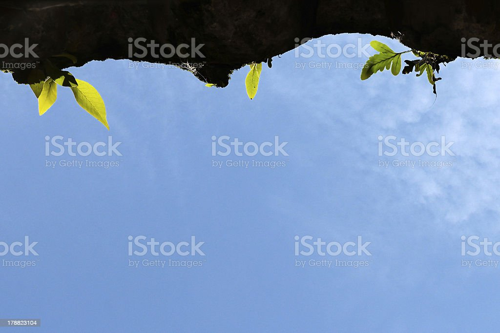 fern growing on dirty roof tile with blue sky royalty-free stock photo