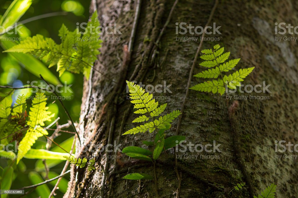 fern in forest stock photo