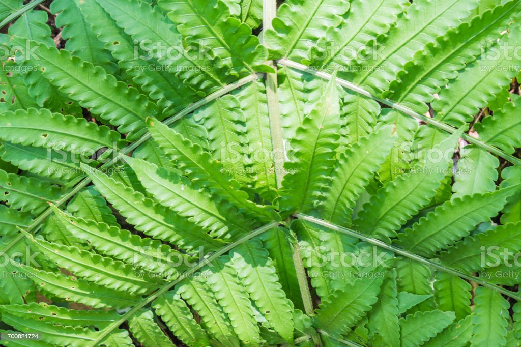 Fern in the forest, Thailand. stock photo