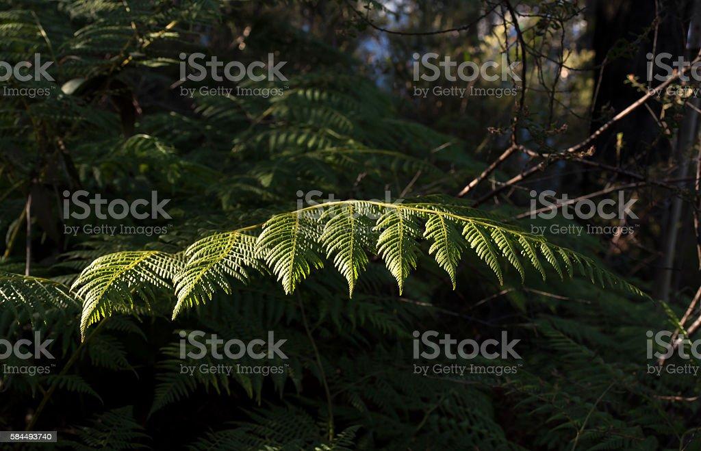 Fern in the sun stock photo