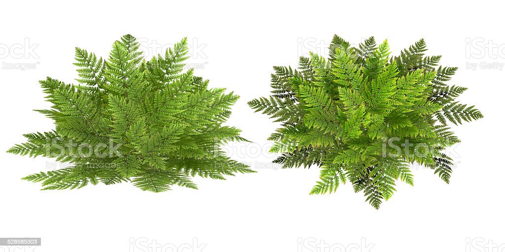 fern, isolated on the white background stock photo