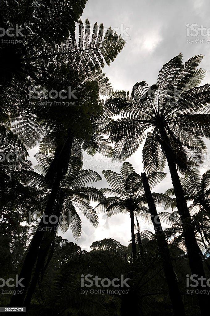 Fern Jungle Silhouette stock photo