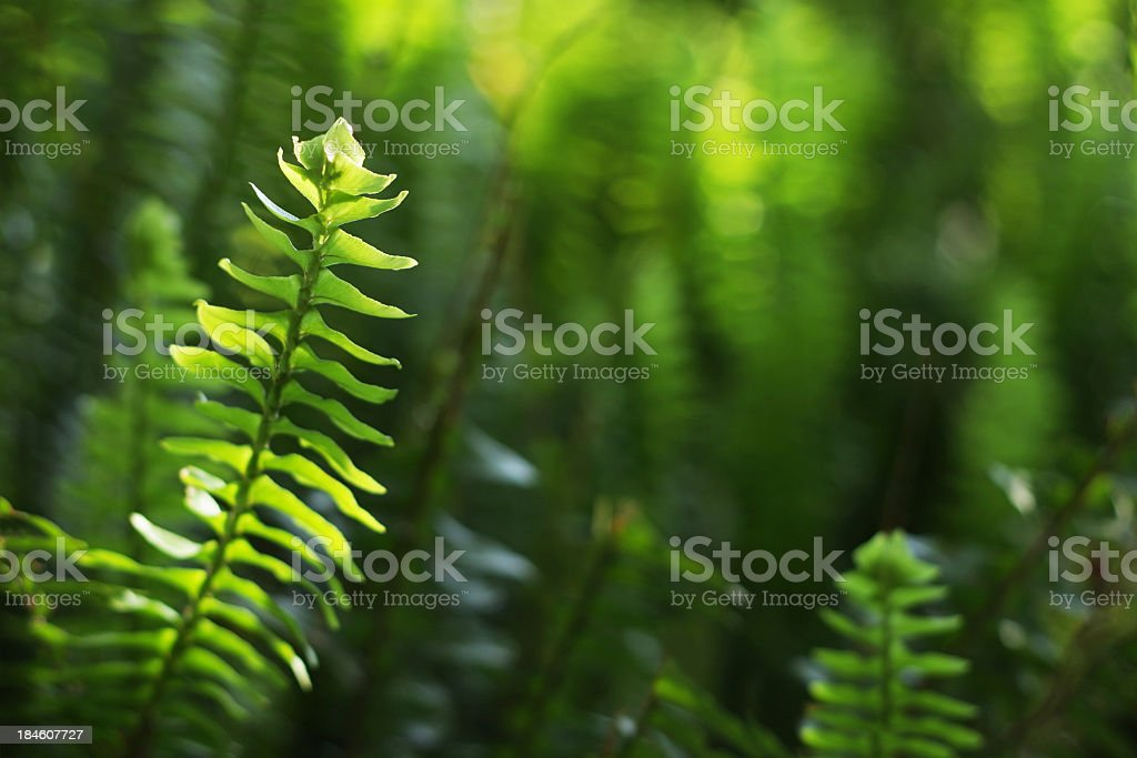 Fern leaf close up with sunlight royalty-free stock photo