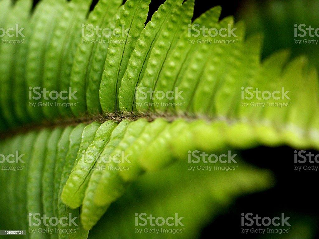 Fern Leaf Details stock photo