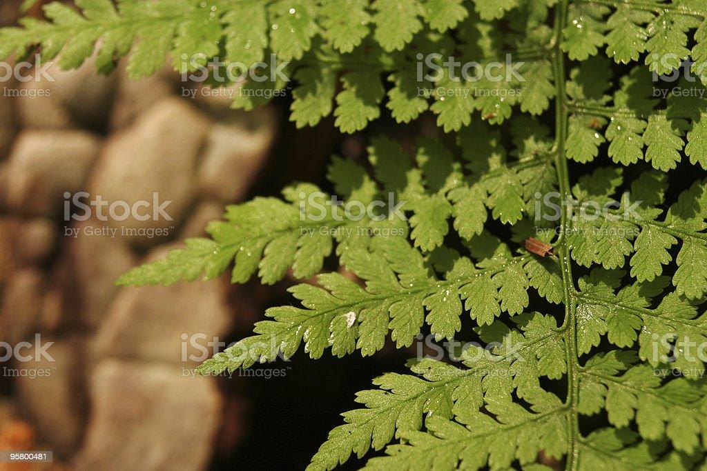 fern leaf glistens with morning dew stock photo