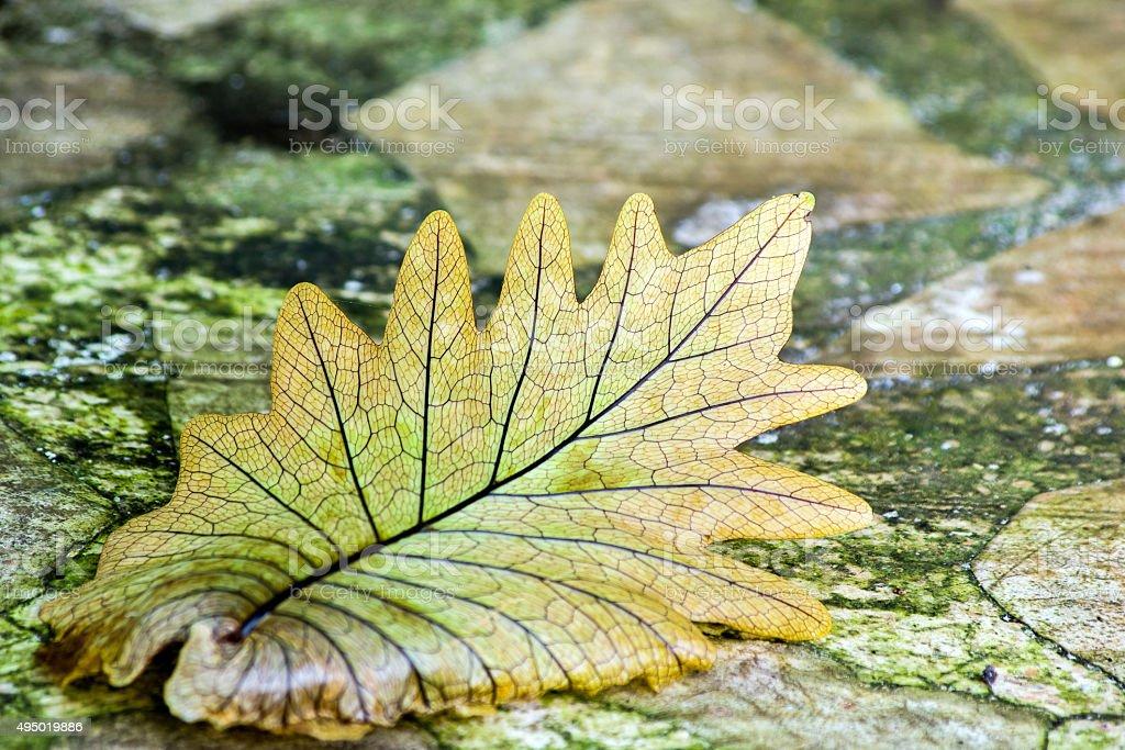 fern leaf on rock table stock photo