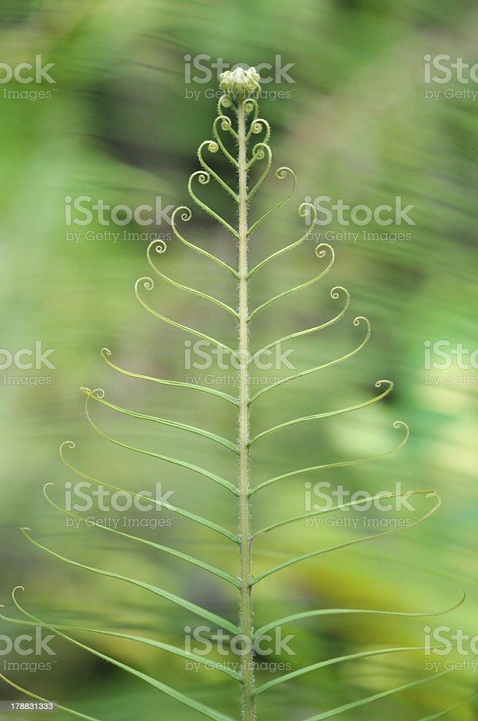 Fern leaf royalty-free stock photo