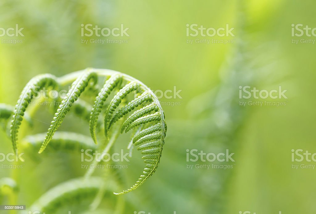 Fern leaf with shallow focus stock photo