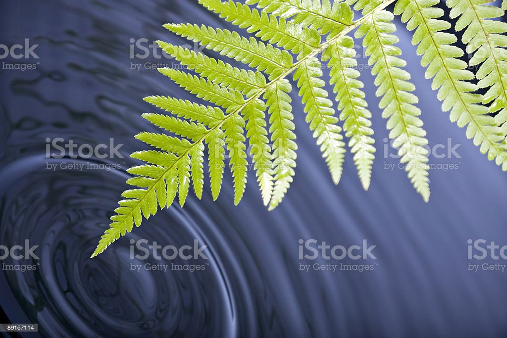 Fern leaf with water ripples royalty-free stock photo