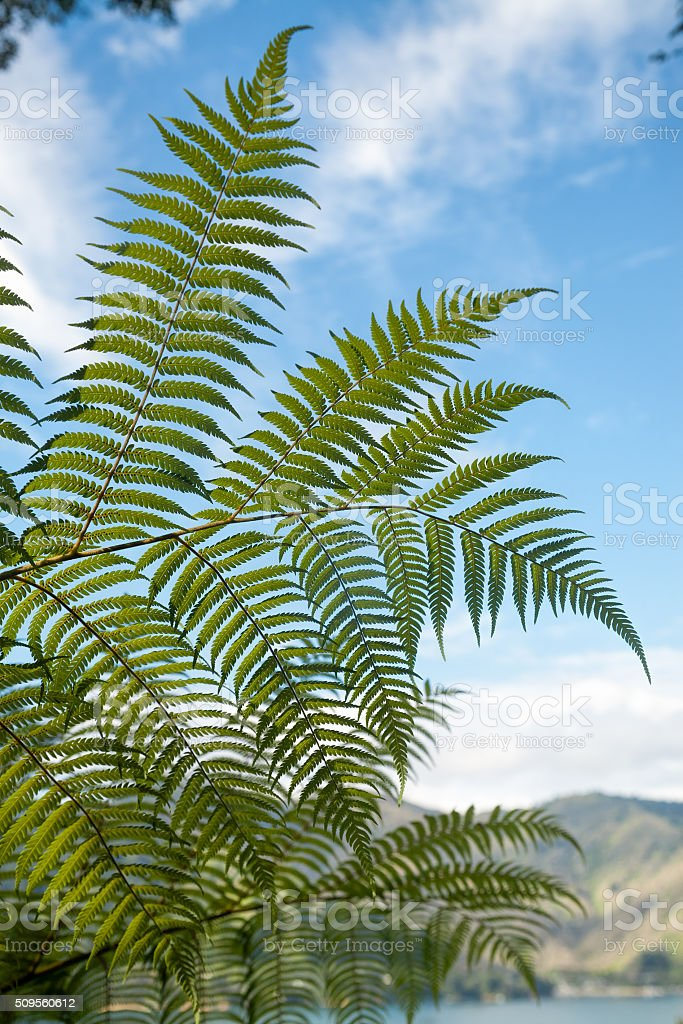 Fern leaves at Queen Charlotte Track in Marlborough Sounds stock photo