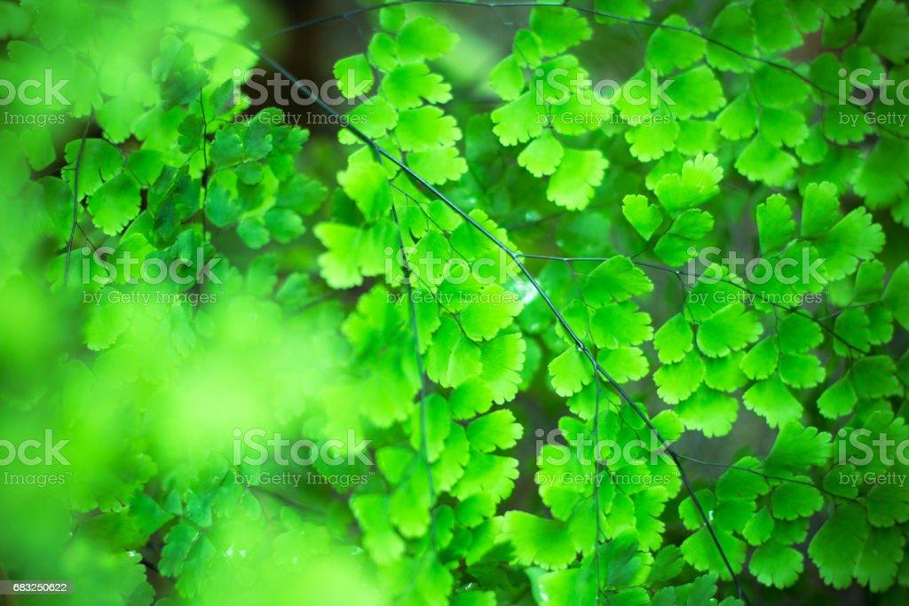 Fern Leaves Background stock photo