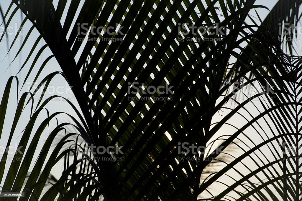 Fern leaves back-lit forming natural patterns and shapes Natural stock photo