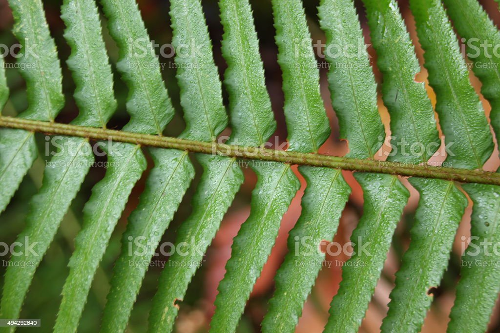 Fern leaves close-up background stock photo
