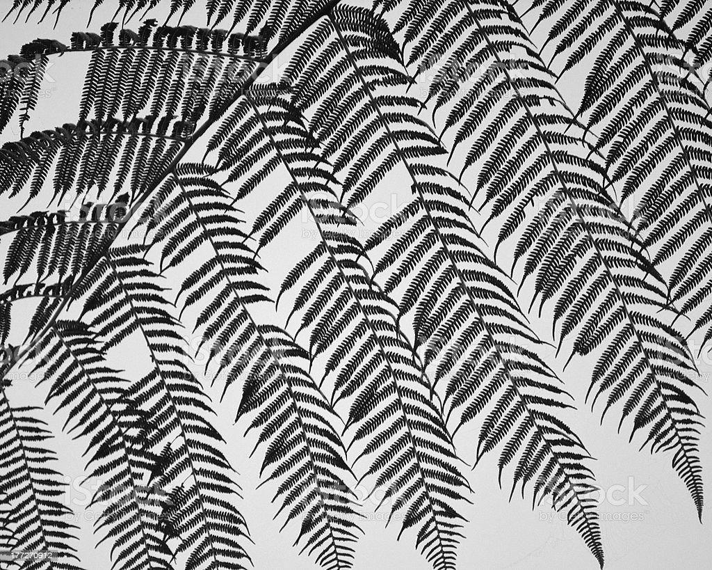 Fern leaves - fractal pattern stock photo