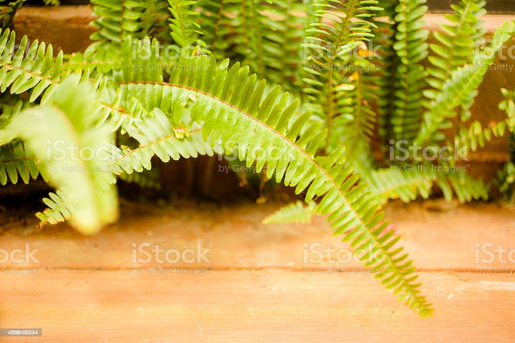 Fern leaves growing beside outdoor patio. Nature. Spring, summer. stock photo