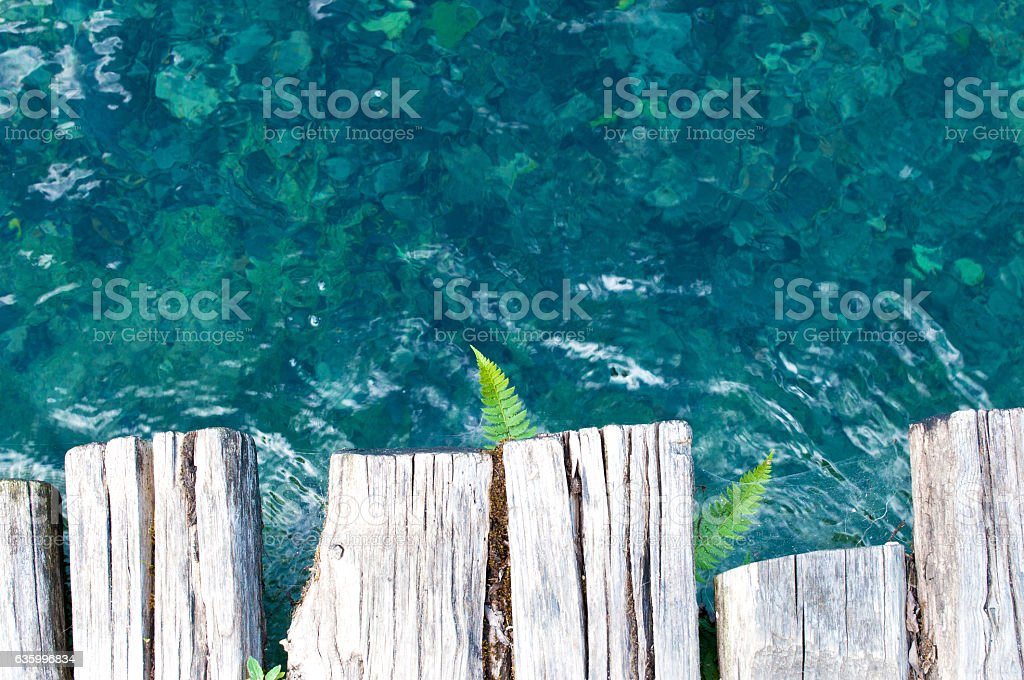 Fern leaves on the background of transparent crystal water stock photo
