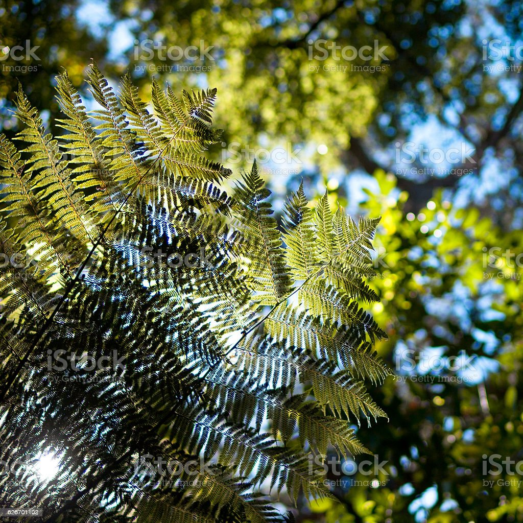 Fern leaves seen from under side stock photo