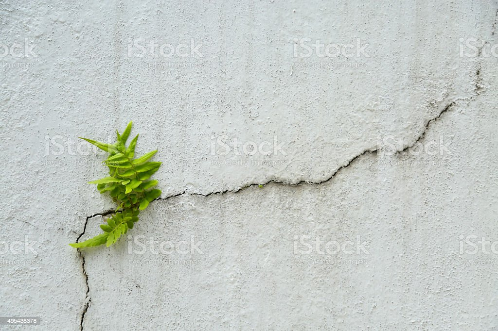fern on vintage wall, Fern background and empty area stock photo