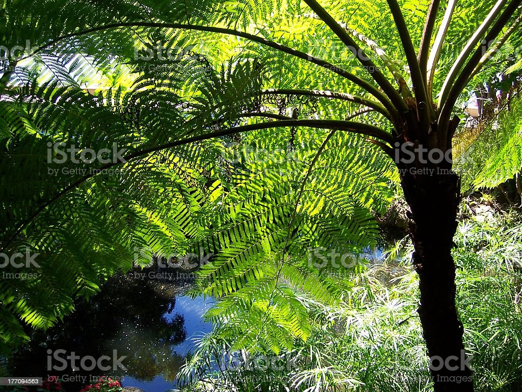 Fern Palm Tree and Jungle Plants stock photo