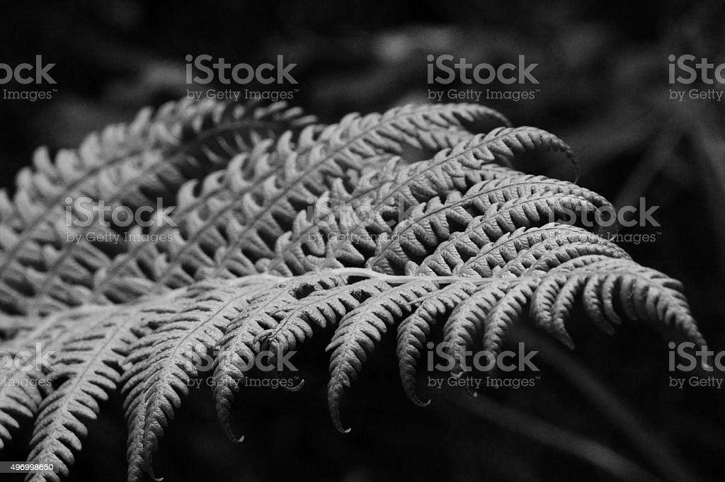 Fern perfect curves stock photo