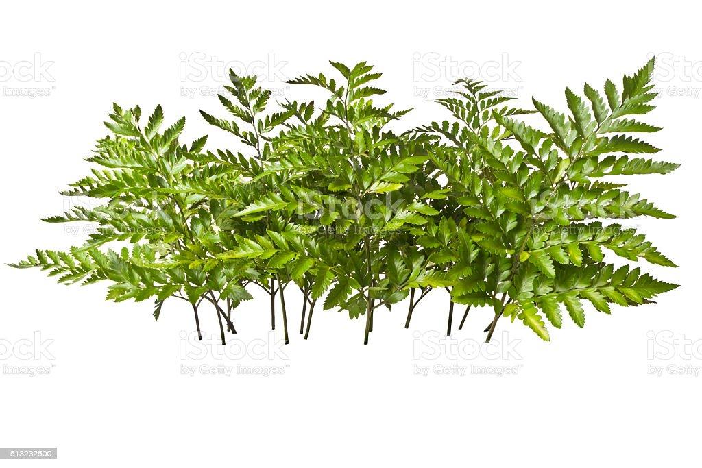 fern stock photo