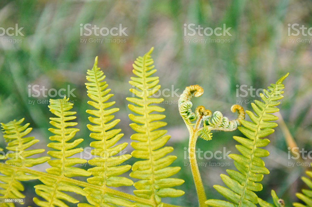 Fern - Stock image stock photo