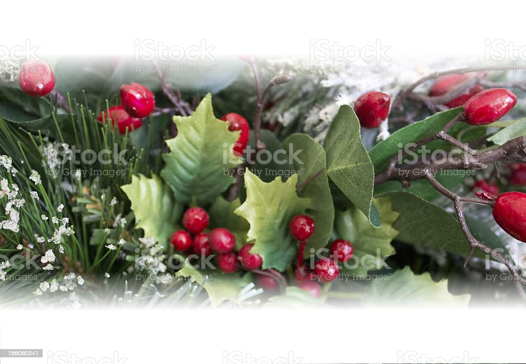 Ferns and Holly stock photo