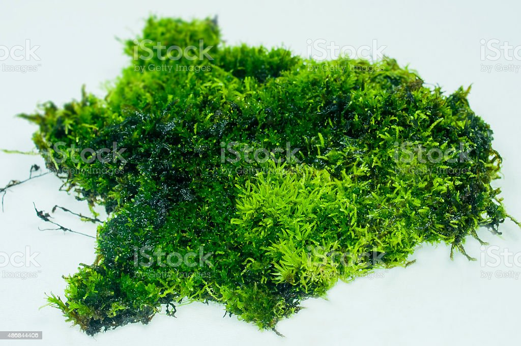 Ferns and moss stock photo