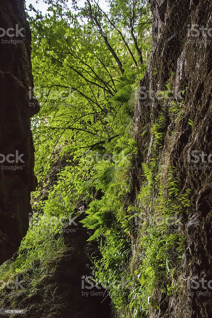 Ferns and Vegetation - Helechos y Vegetacion stock photo