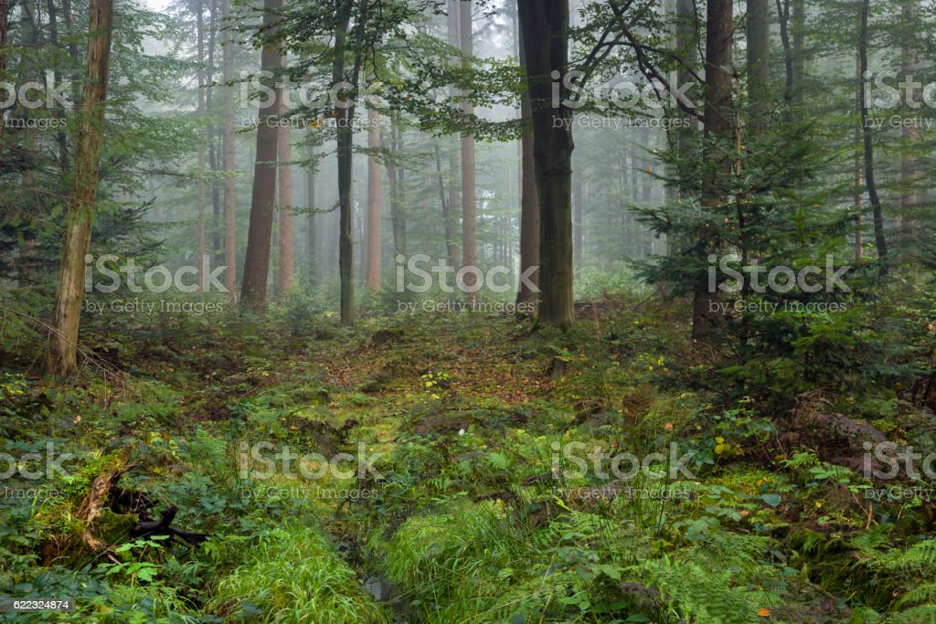 Ferns, bushes, copse and ditch in foggy autumn forest stock photo