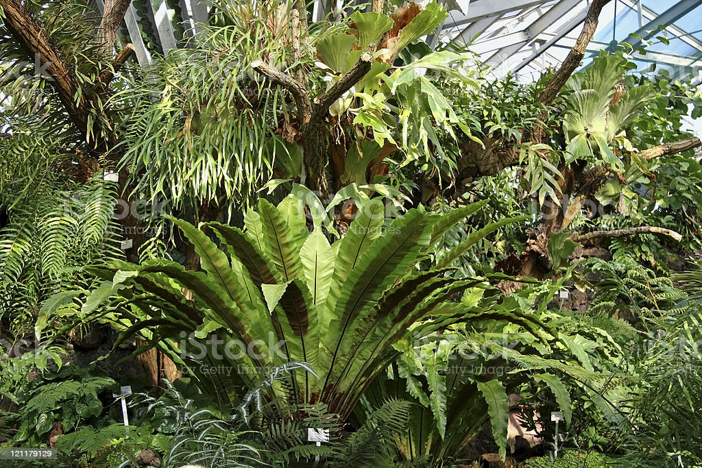 Ferns growing in the Greenhouse royalty-free stock photo