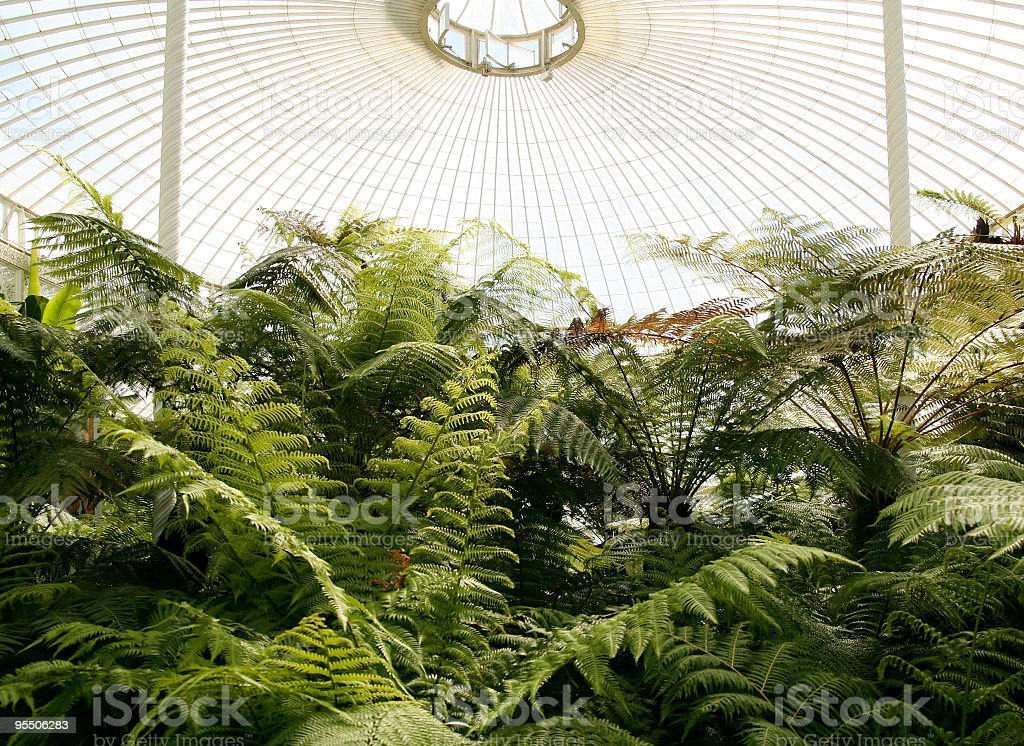 Ferns in a Victorian Fernery (horizontal) royalty-free stock photo