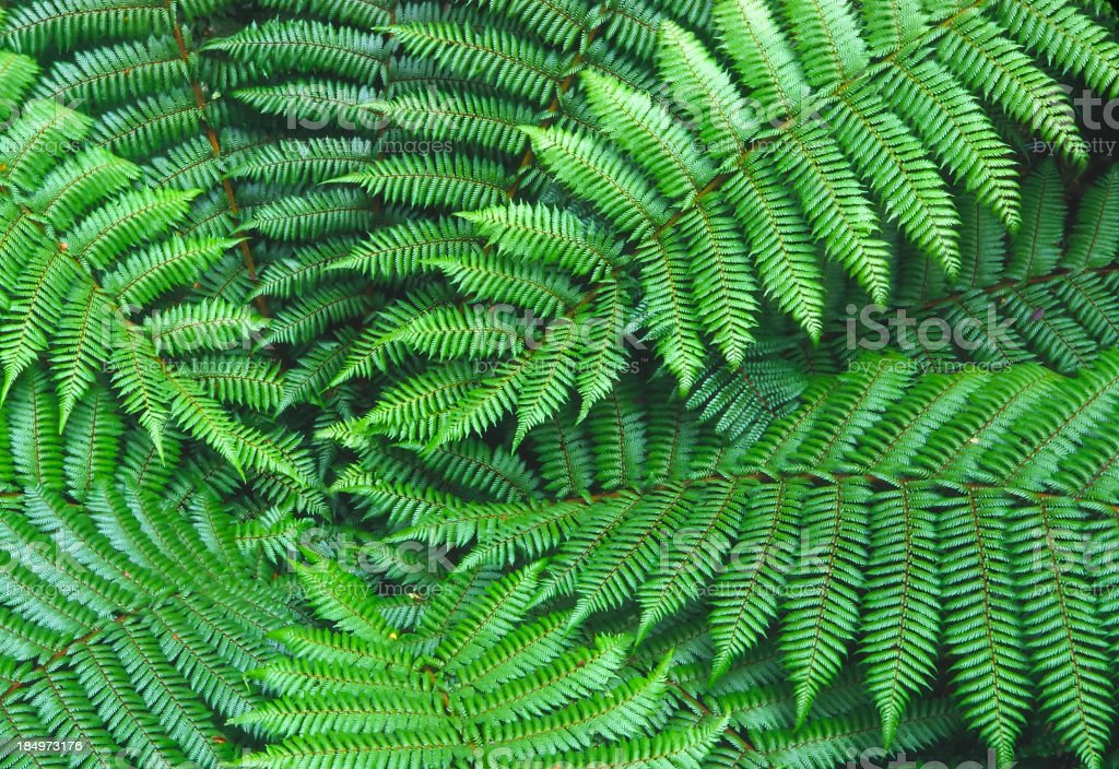 Ferns in Fiordland royalty-free stock photo