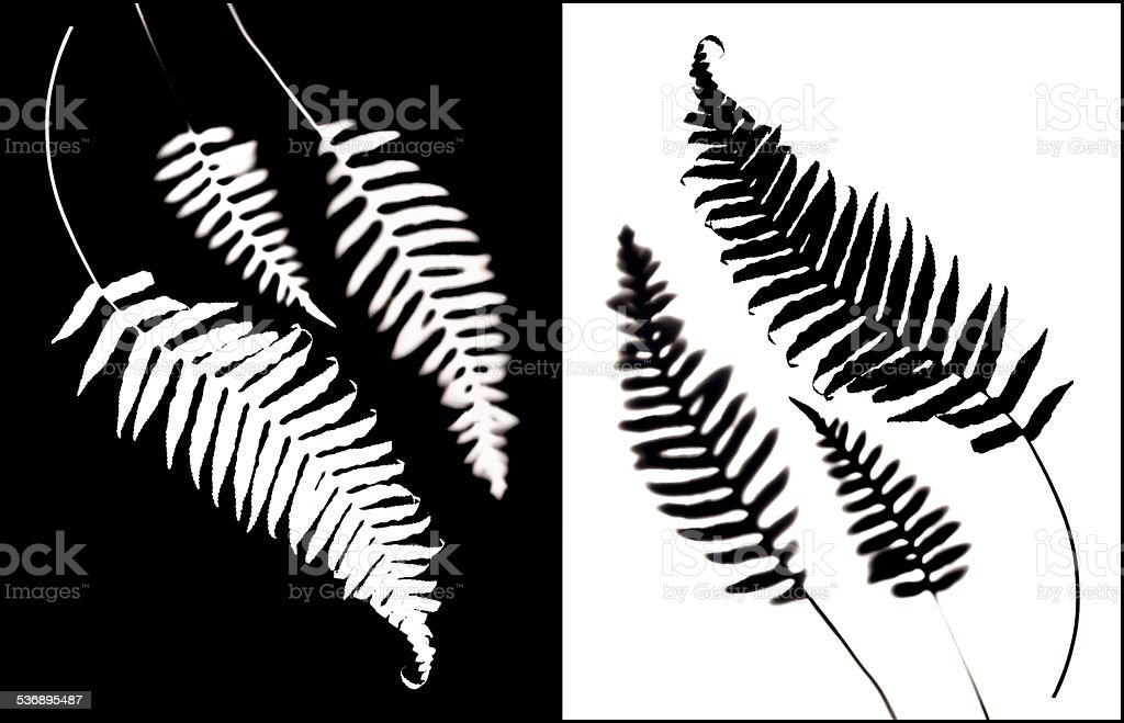 Ferns in positive and negative stock photo