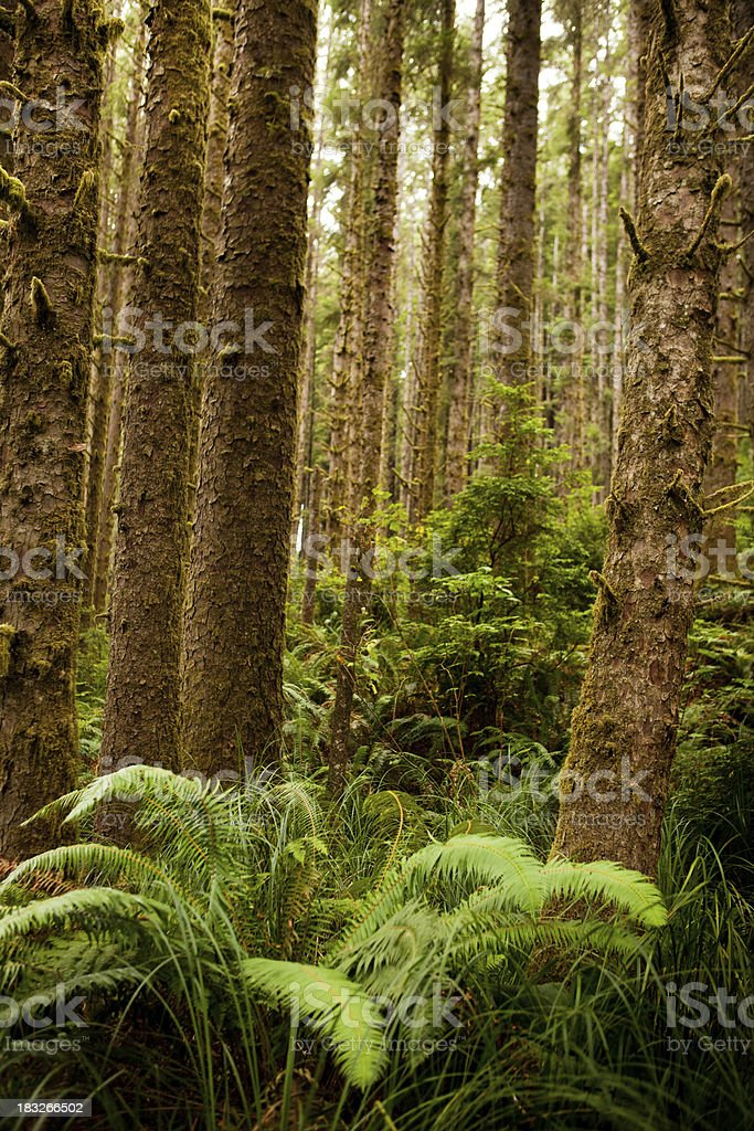 Ferns in the forest royalty-free stock photo