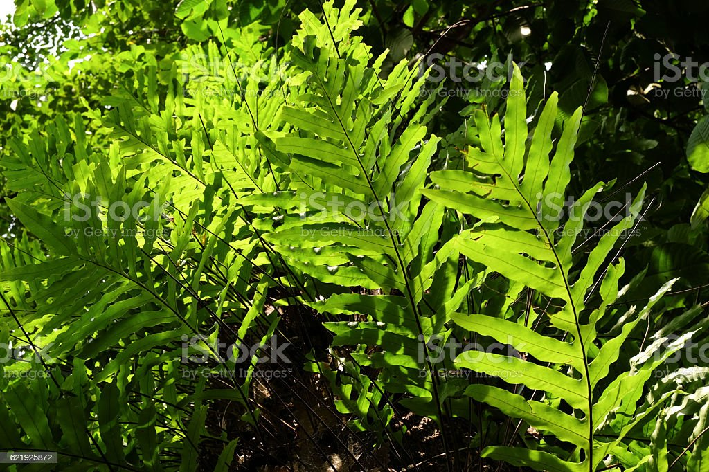 ferns leaves stock photo