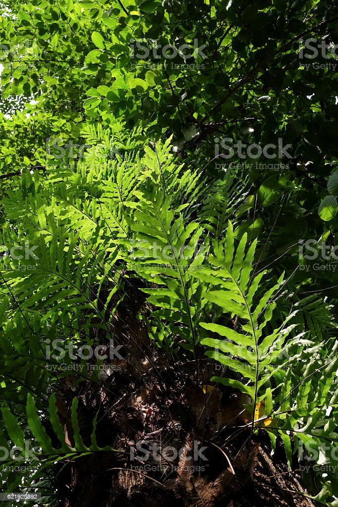 ferns leaves stock photo