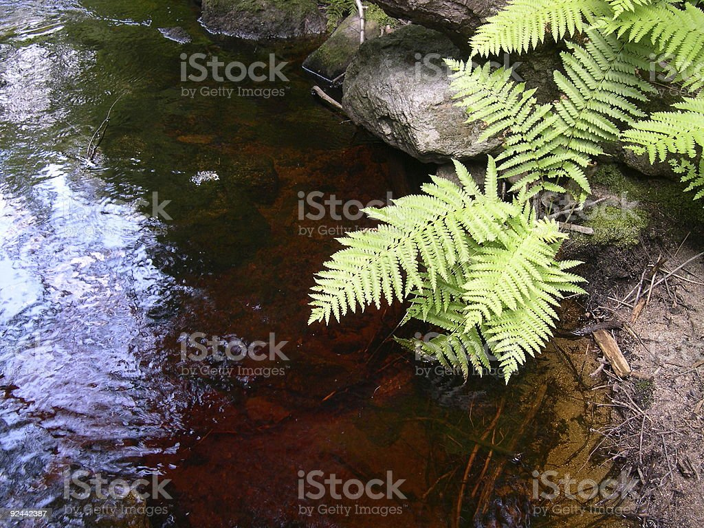 Ferns over a red creek stock photo