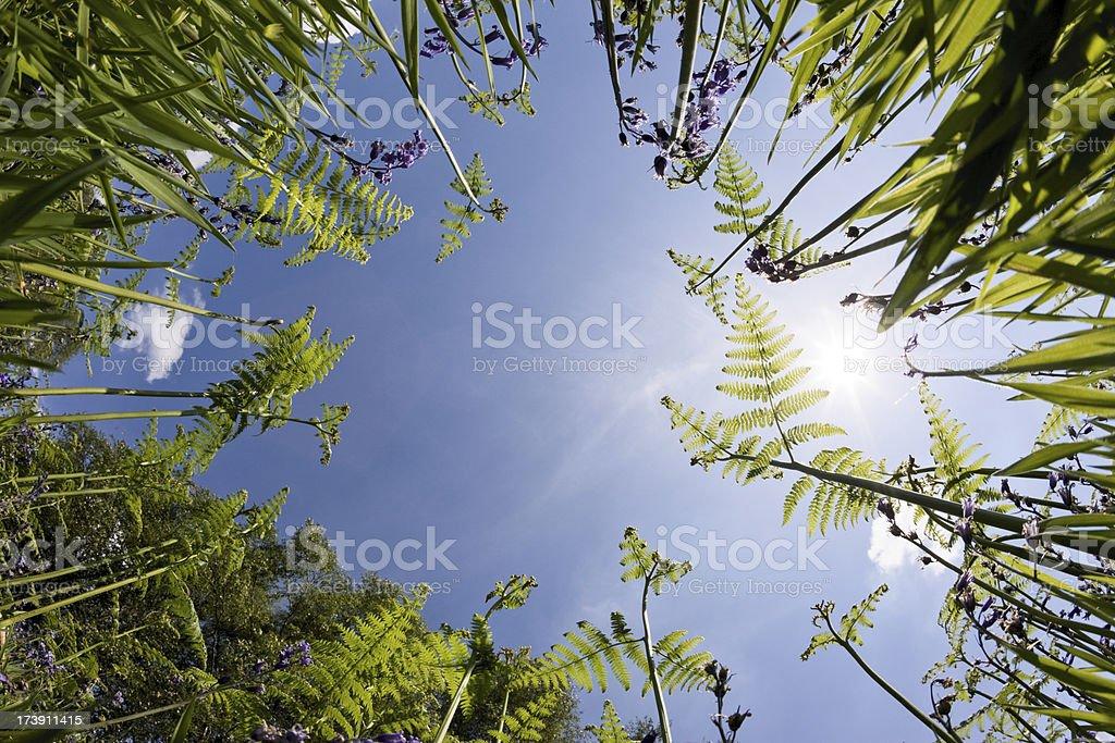 Ferns royalty-free stock photo