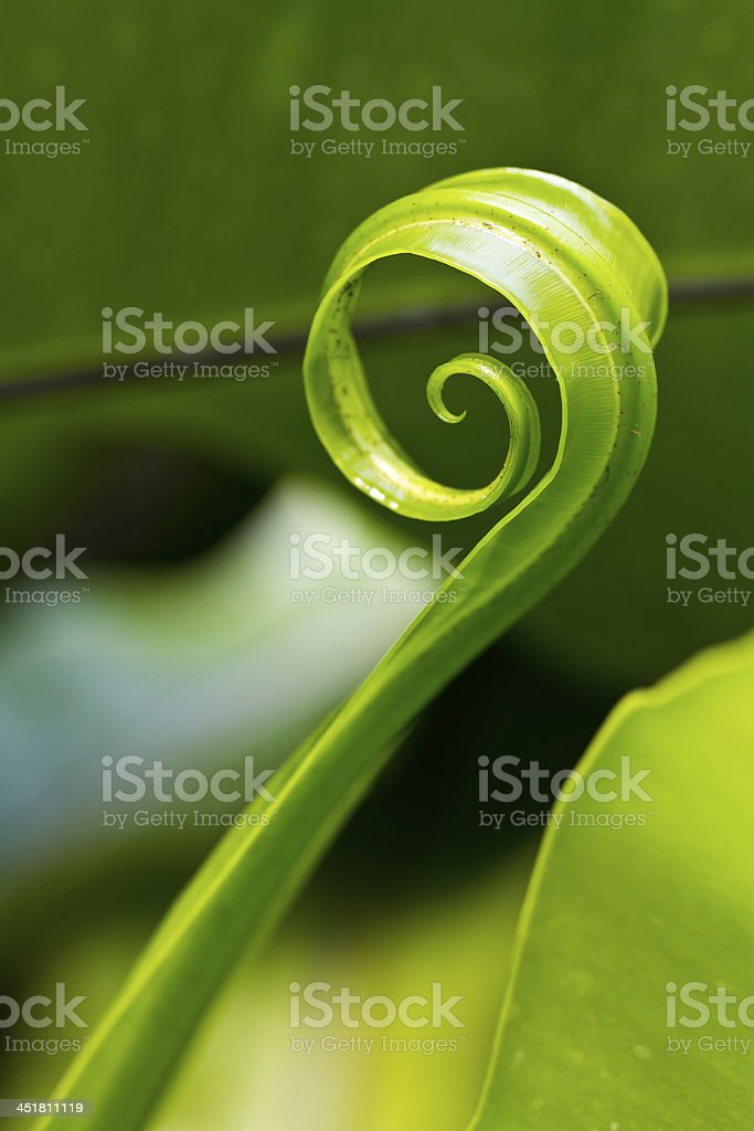Ferns. royalty-free stock photo