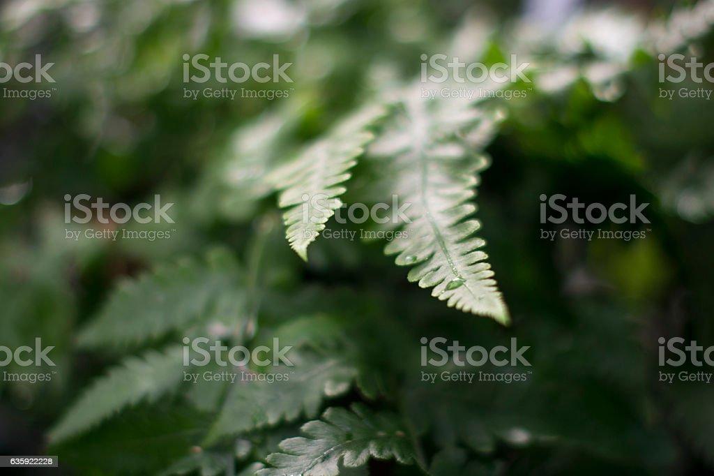Ferns stock photo