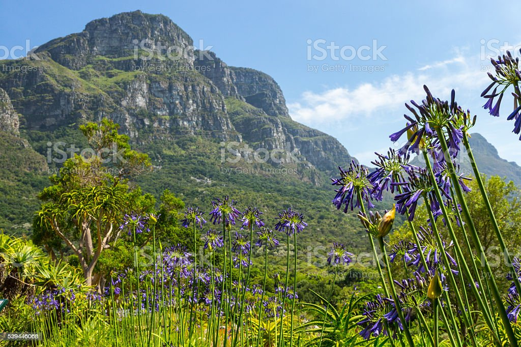 Fernwood Peak, Table Mountain, From Kirstenbosch Gardens, Cape Town stock photo