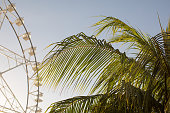 Ferris wheel and palm tree